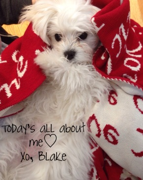 Happy Valentine's Day! XO – Tucker & Blake